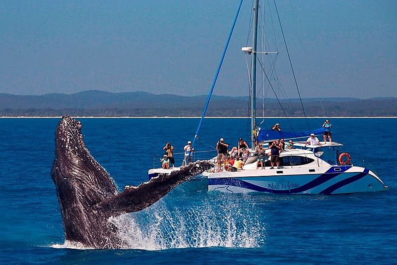 When at Sandy Footprints Holiday House,Take a Whales viewing Tour